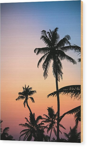 Belize Palms Wood Print
