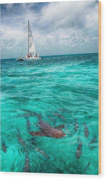 Belize Turquoise Shark N Sail  Wood Print