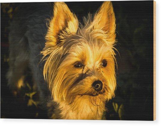 Bella The Wonder Dog Wood Print