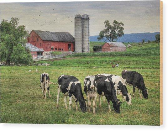Belleville Cows Wood Print