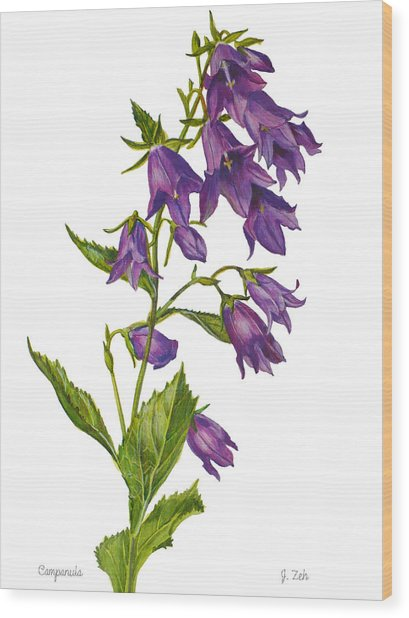 Bellflower - Campanula Wood Print