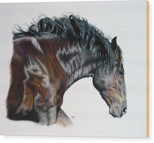 Bellus Equus Wood Print