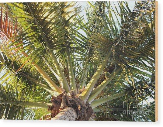 Below A Palm Tree Wood Print