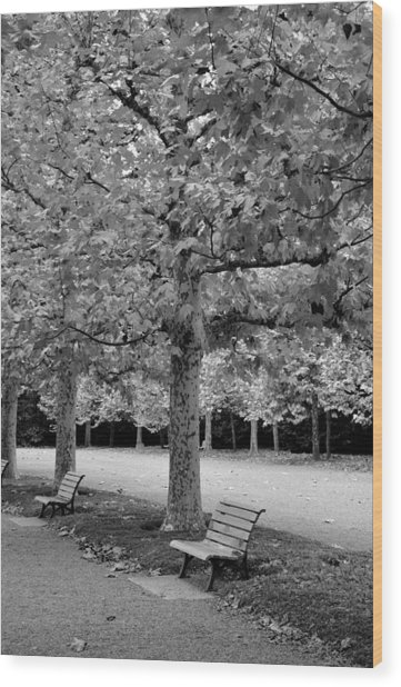Benches In The Park Wood Print