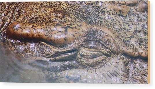 Beneath The Surface Wood Print by Debbie Cundy