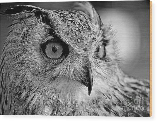 Bengal Owl Black And White Wood Print
