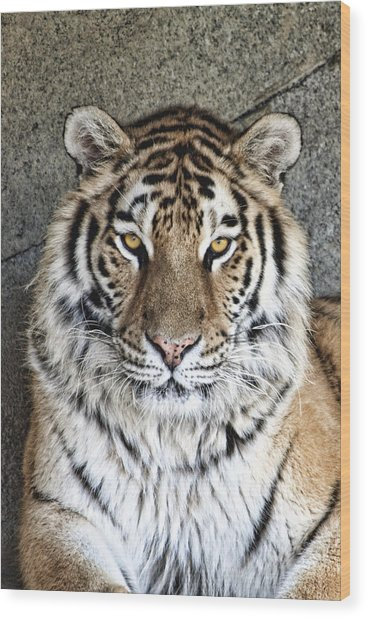 Bengal Tiger Vertical Portrait Wood Print