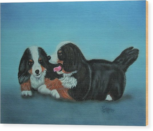 Bernese Mountain Puppies Wood Print