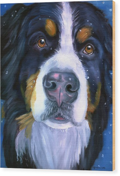 Bernese Mountain Dog In Snowfall Wood Print by Lyn Cook