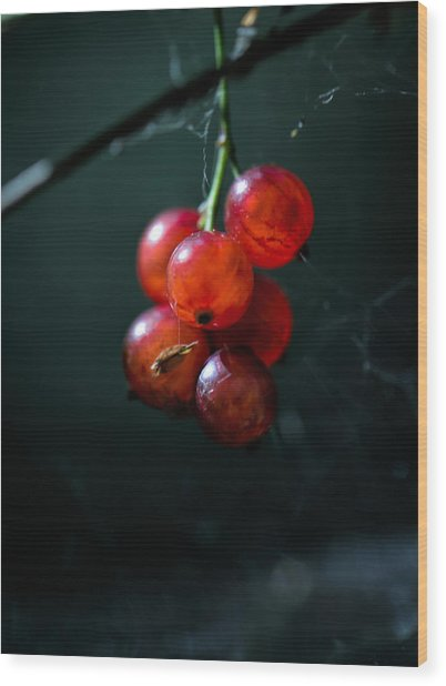 Berries Wood Print