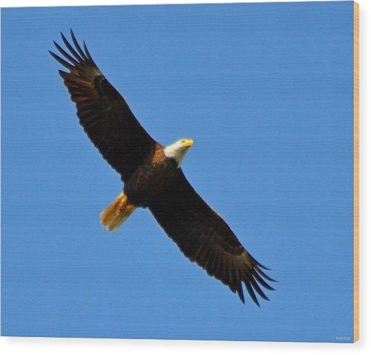 Best Bald Eagle On Blue Wood Print
