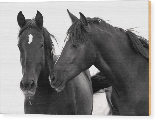 Best Buds Wild Mustang Wood Print