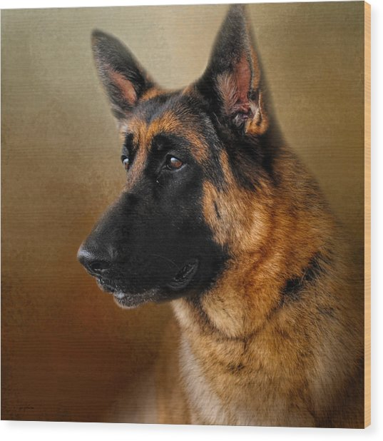 Best In Show - German Shepherd Wood Print