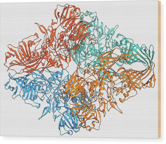 Beta-galactosidase Molecule Wood Print by Laguna Design/science Photo Library