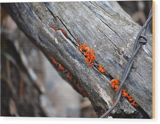 Between The Cracks Wood Print