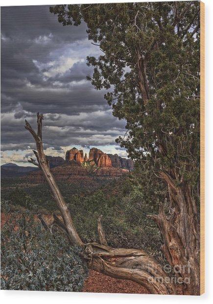 Beyond The Shaggy Bark Juniper Wood Print