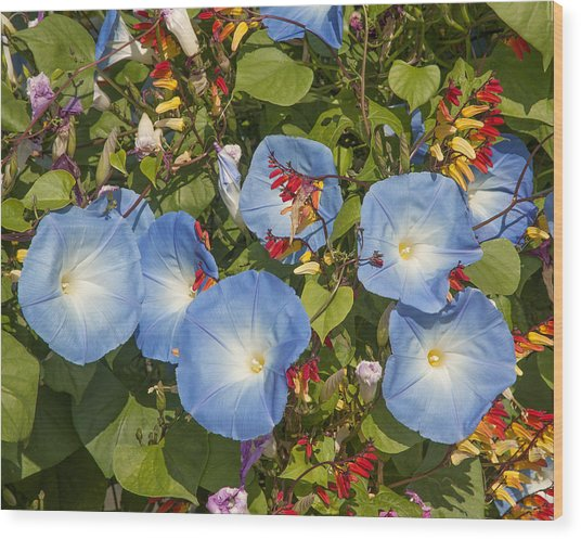 Bhubing Palace Gardens Morning Glory Dthcm0433 Wood Print