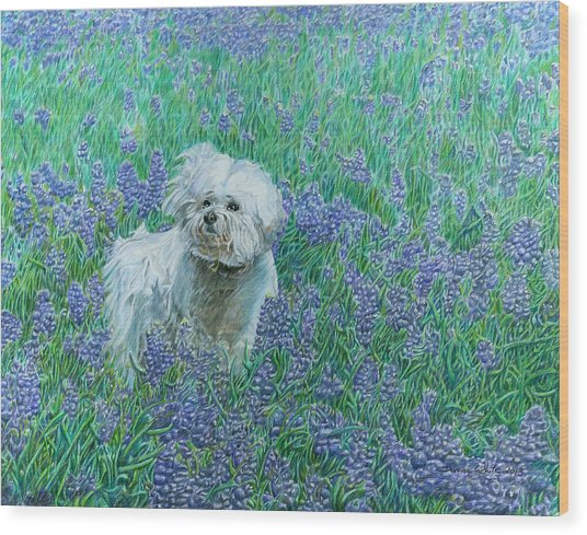 Bichon In The Bluebonnets Wood Print