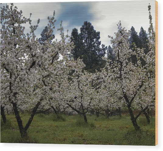Big Apple Blossoms Wood Print