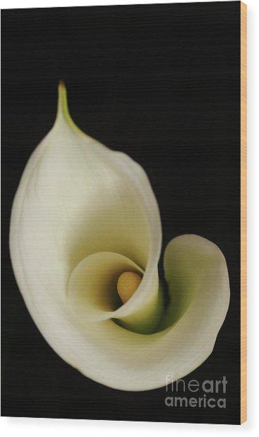Big Bold Calla Lily On Black Wood Print