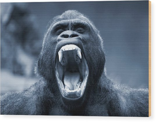 Big Gorilla Yawn Wood Print