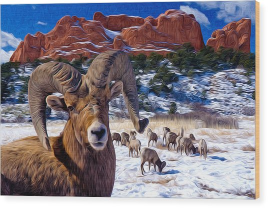 Big Horn Sheep At The Garden Wood Print