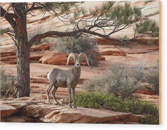Big Horn Zion National Park Ut Wood Print