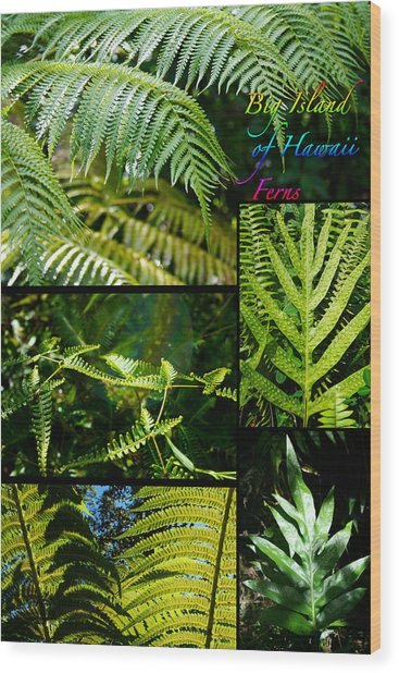 Big Island Of Hawaii Ferns 2 Wood Print by Colleen Cannon