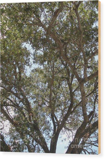 Big Oak Tree Wood Print