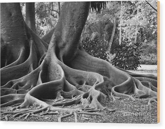 Big Roots Wood Print
