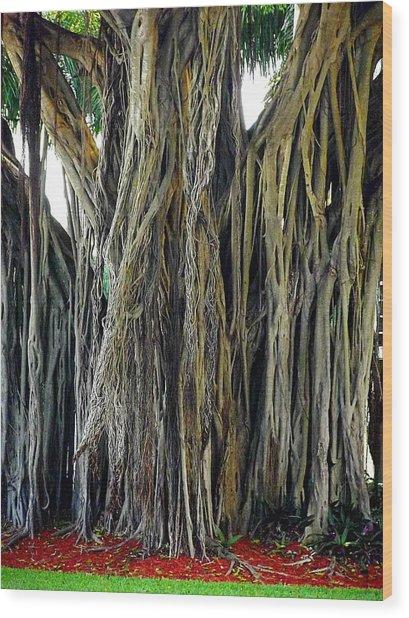 Big Tree Wood Print by Aggie Janowska