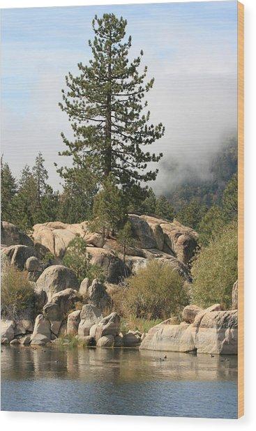Big Tree In Big Bear Wood Print by Darrin Aldridge