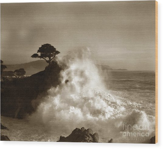Big Wave Hitting The Lone Cypress Tree Pebble Beach California 1916 Wood Print