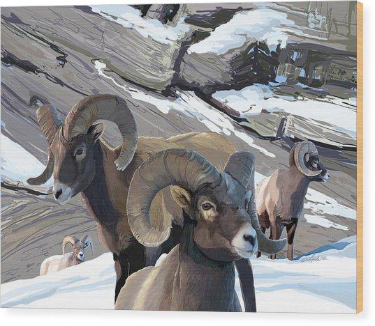Bighorn Rams Wood Print