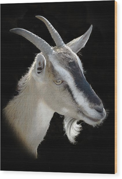 Billy Goat Wood Print