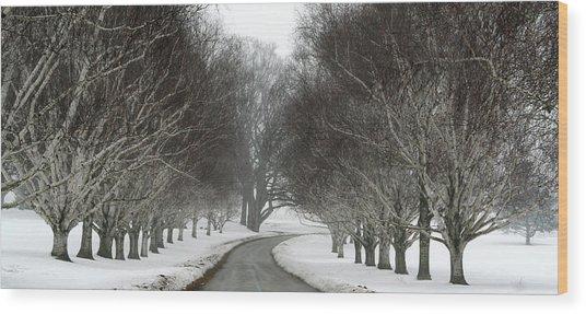 Birch Alley Wood Print