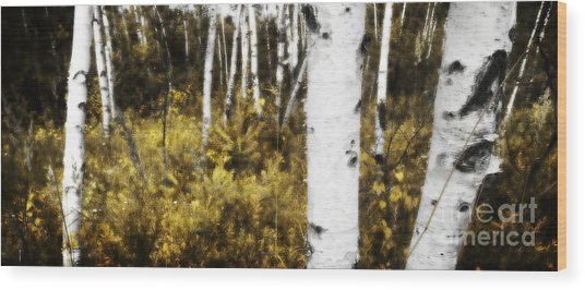 Birch Forest I Wood Print