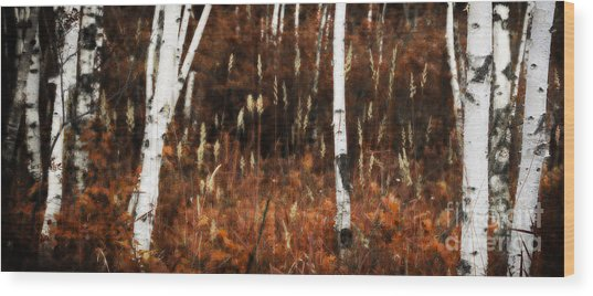 Birch Forest II Wood Print