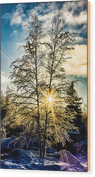 Birch Frost Wood Print