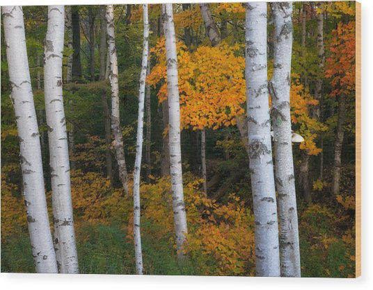 Birch Tree Pan Wood Print