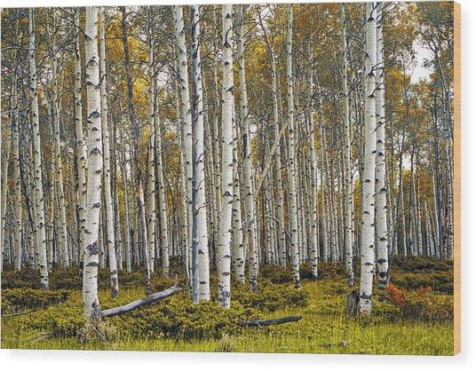 Aspen Trees In Autumn Wood Print