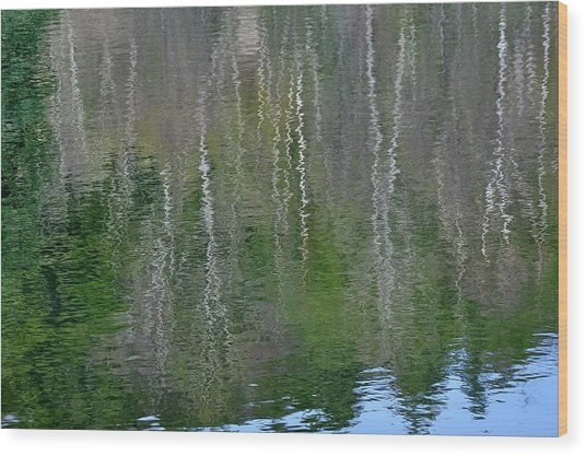 Birch Trees Reflected In Pond Wood Print