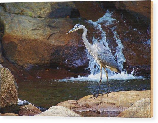 Bird By A Waterfall  Wood Print