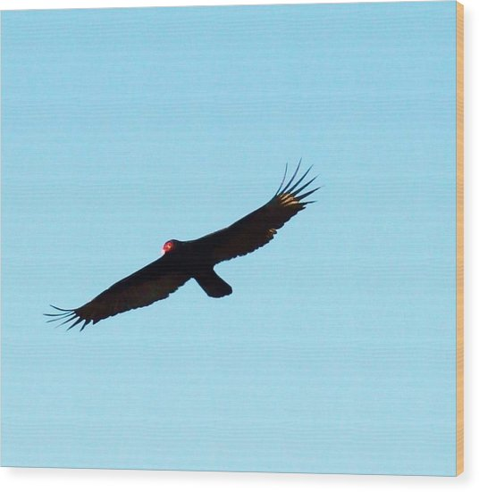 Bird In Flight Wood Print by Van Ness
