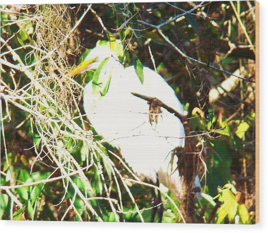 Bird In Mangroves Wood Print by Van Ness