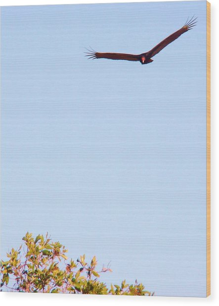 Bird In Pursuit Wood Print by Van Ness