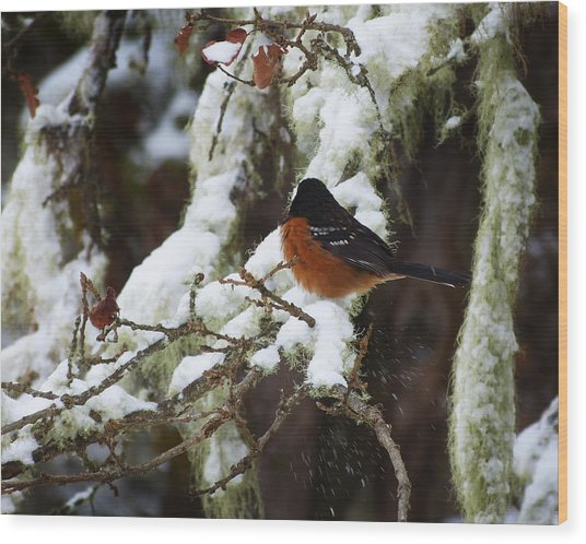 Bird In Snow Wood Print