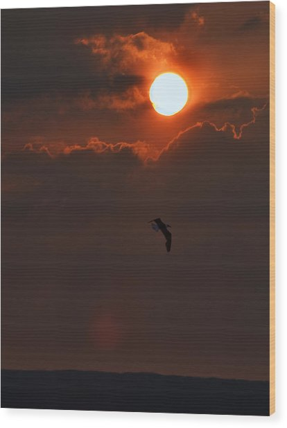 Bird In Sunset Wood Print by Tony Reddington
