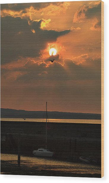 Bird In The Sun Wood Print by Tony Reddington