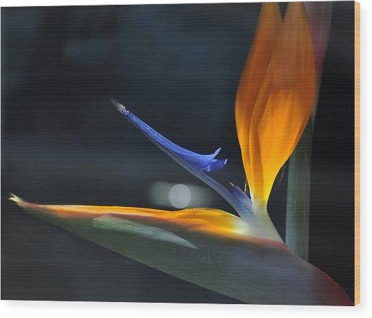 Bird In The Window Wood Print